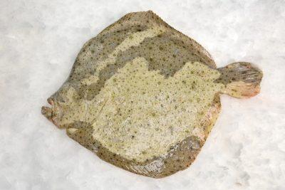 peixexpres-productos-rodaballo-1